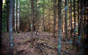 Ungskogen